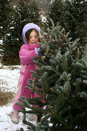 real christmas trees help filter dust and smog from the air and help stop soil erosion
